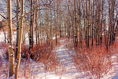 "Winter Path 8 x 12"" digitally-altered photograph"